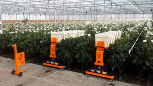 Horticultural AGV harvesting trolley