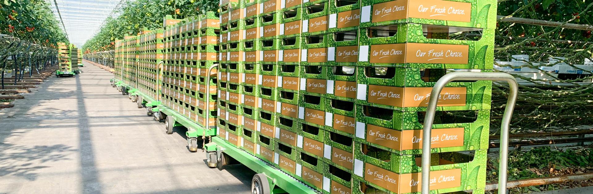 Efficient harvesting with the help of harvesting trolleys   Steenks Service